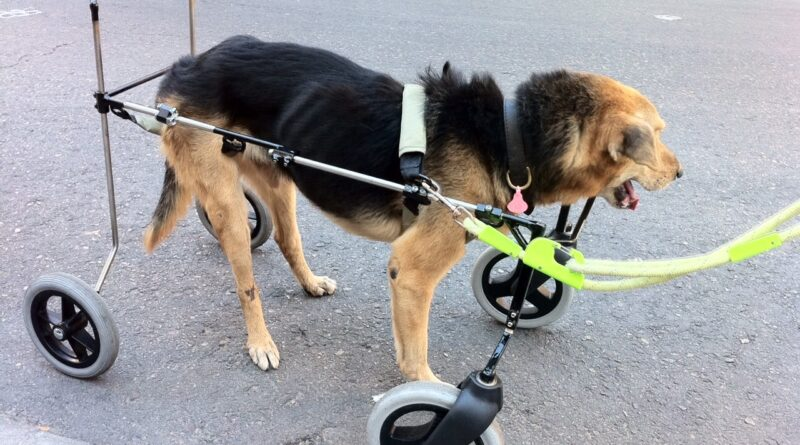 Mascotas… ¡IRREEMPLAZABLES!